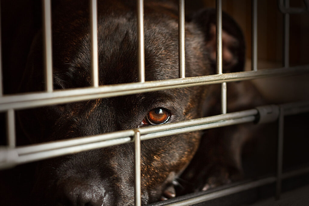 A a dog peeking out of a dark cage.